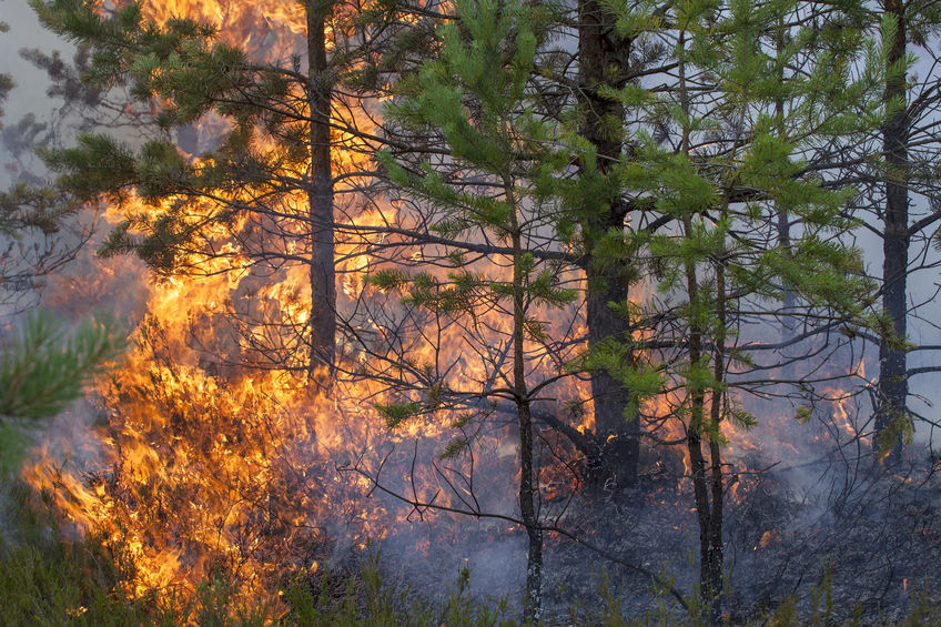 solar energy and wildfires