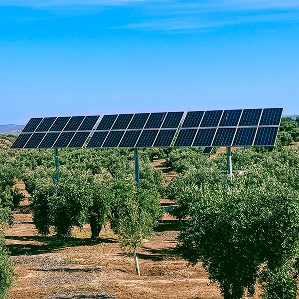 Agricultural Solar Panels on Farm